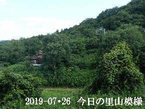 2019-07・26 今日の里山模様・・・ (5).JPG