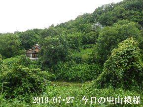 2019-07・27 今日の里山模様・・・ (5).JPG
