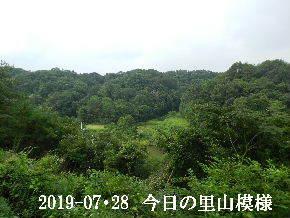 2019-07・28 今日の里山模様・・・ (3).JPG