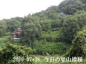 2019-07・28 今日の里山模様・・・ (6).JPG