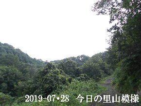2019-07・28 今日の里山模様・・・ (7).JPG