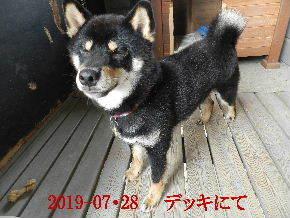 2019-07・28 今日の麻呂 (1).JPG