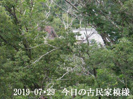 2019-07・29 今日の古民家模様.JPG