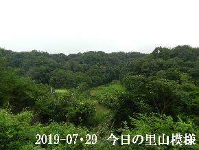 2019-07・29 今日の里山模様・・・ (3).JPG