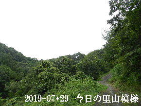 2019-07・29 今日の里山模様・・・ (6).JPG