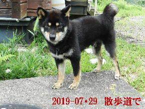 2019-07・29 今日の麻呂 (5).JPG