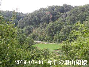 2019-07・30 今日の里山模様・・・ (4).JPG