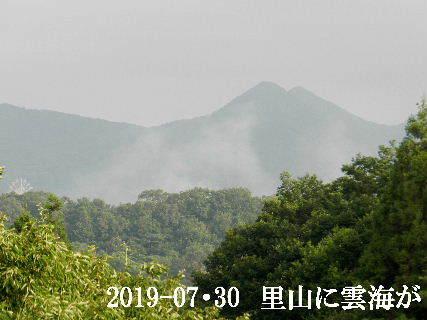 2019-07・30 里山に雲海が.JPG