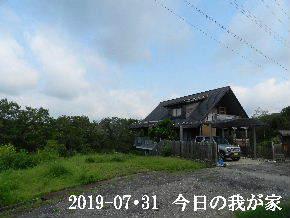 2019-07・31 今日の里山模様・・・ (1).JPG