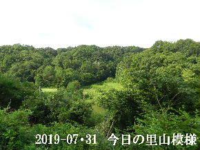 2019-07・31 今日の里山模様・・・ (3).JPG
