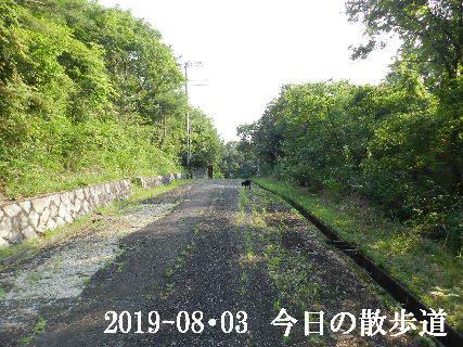 2019-08・03 今日の里山模様・・・ (3).JPG