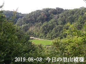 2019-08・03 今日の里山模様・・・ (5).JPG
