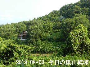 2019-08・03 今日の里山模様・・・ (6).JPG