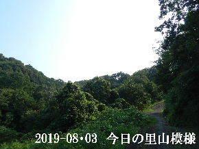 2019-08・03 今日の里山模様・・・ (7).JPG