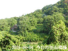 2019-08・04 今日の里山模様・・・ (5).JPG