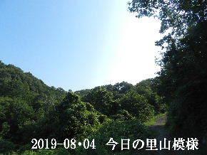 2019-08・04 今日の里山模様・・・ (6).JPG