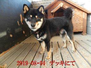2019-08・04 今日の麻呂 (2).JPG