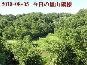 2019-08・05 今日の里山模様・・・ (3).JPG