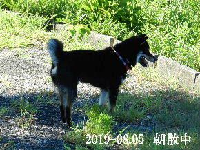 2019-08・05 今日の麻呂 (5).JPG