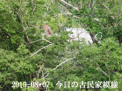 2019-08・07 今日の古民家模様.JPG