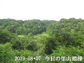 2019-08・07 今日の里山模様・・・ (3).JPG
