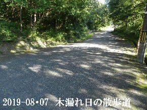 2019-08・07 今日の里山模様・・・ (7).JPG
