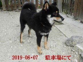 2019-08・07 今日の麻呂 (3).JPG