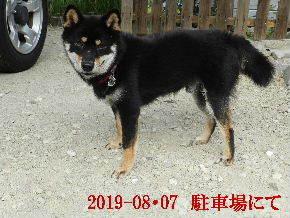 2019-08・07 今日の麻呂 (4).JPG