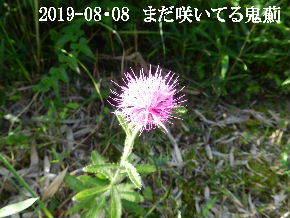 2019-08・08 今日の出遭い・・・ (3).JPG
