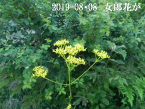 2019-08・08 今日の出遭い・・・ (4).JPG