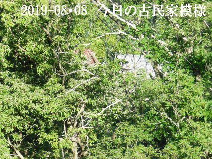 2019-08・08 今日の古民家模様.JPG