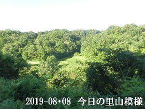 2019-08・08 今日の里山模様・・・ (3).JPG