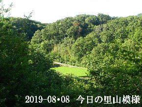 2019-08・08 今日の里山模様・・・ (4).JPG