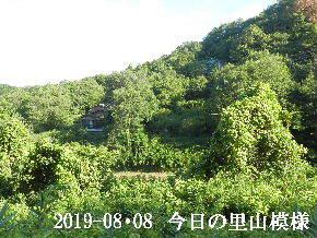 2019-08・08 今日の里山模様・・・ (5).JPG