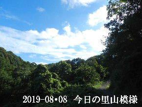 2019-08・08 今日の里山模様・・・ (6).JPG