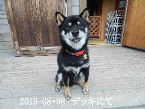 2019-08・08 今日の麻呂 (2).JPG