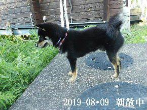 2019-08・09 今日の麻呂 (6).JPG