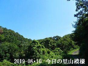 2019-08・10 今日の里山模様・・・ (6).JPG