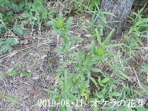 2019-08・11 今日の出遭い・・・ (3).JPG
