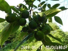 2019-08・11 今日の出遭い・・・ (5).JPG