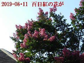 2019-08・11 今日の出遭い・・・ (6).JPG