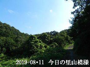 2019-08・11 今日の里山模様・・・ (6).JPG