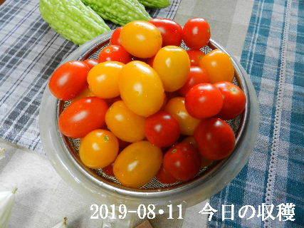 2019-08・11 我が家のスナップ・・・ (3).JPG
