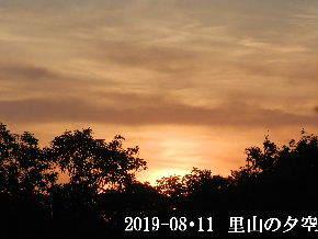 2019-08・11 里山の夕空・・・ (1).JPG