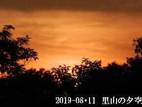2019-08・11 里山の夕空・・・ (2).JPG