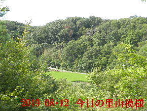 2019-08・12 今日の里山模様・・・ (4).JPG