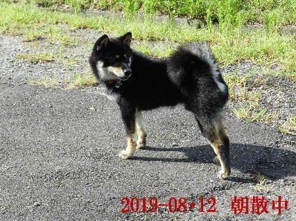 2019-08・12 今日の麻呂 (5).JPG