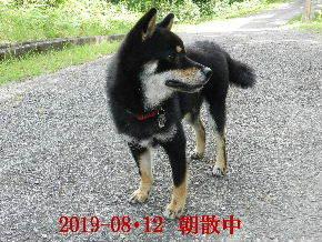 2019-08・12 今日の麻呂 (7).JPG