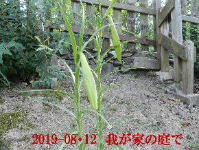 2019-08・12 我が家のスナップ・・・ (6).JPG
