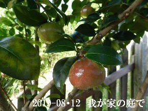 2019-08・12 我が家のスナップ・・・ (9).JPG